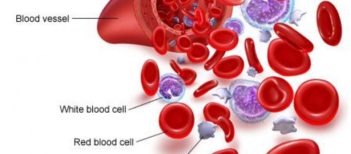 white_blood_cells_diagram